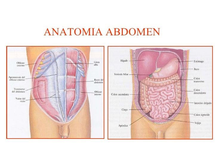 AMIGOS PARA SIEMPRE: Conceptos de anatomía humana