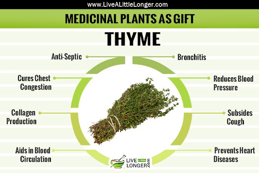Medicinal Herbal Plant That Can Be Given As Gift - Thyme