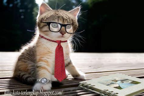 gambar gambar wallpaper kucing lucu imut banget  kata