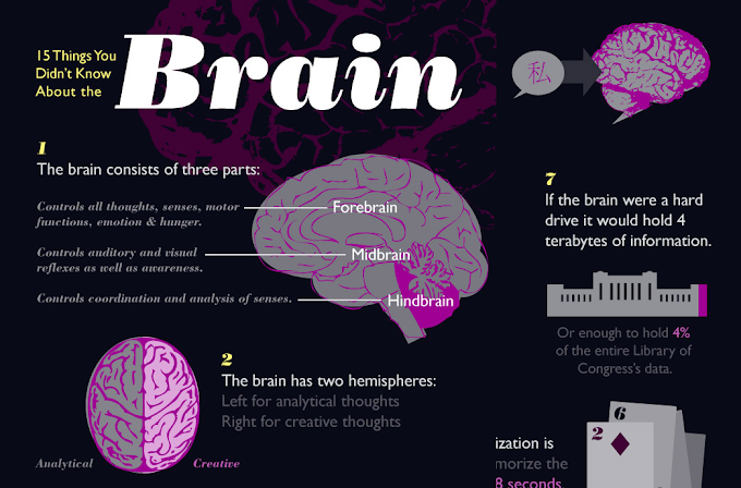 Infographic : 15 Things You Didn't Know About the Brain
