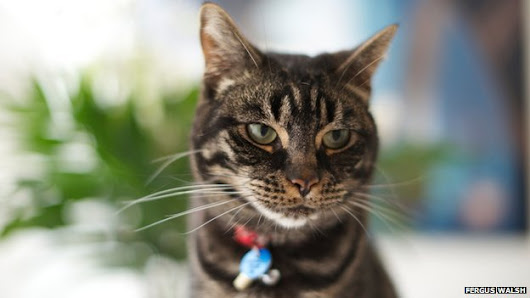 Pet cats infect two people with TB