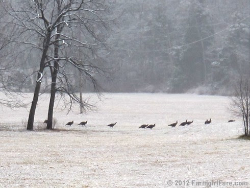 Wild turkeys in the snowy hayfield - FarmgirlFare.com