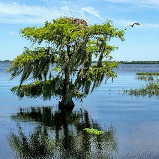VISIT the SOUTH™with Tammy Lee BradleyBlue Cypress Lake