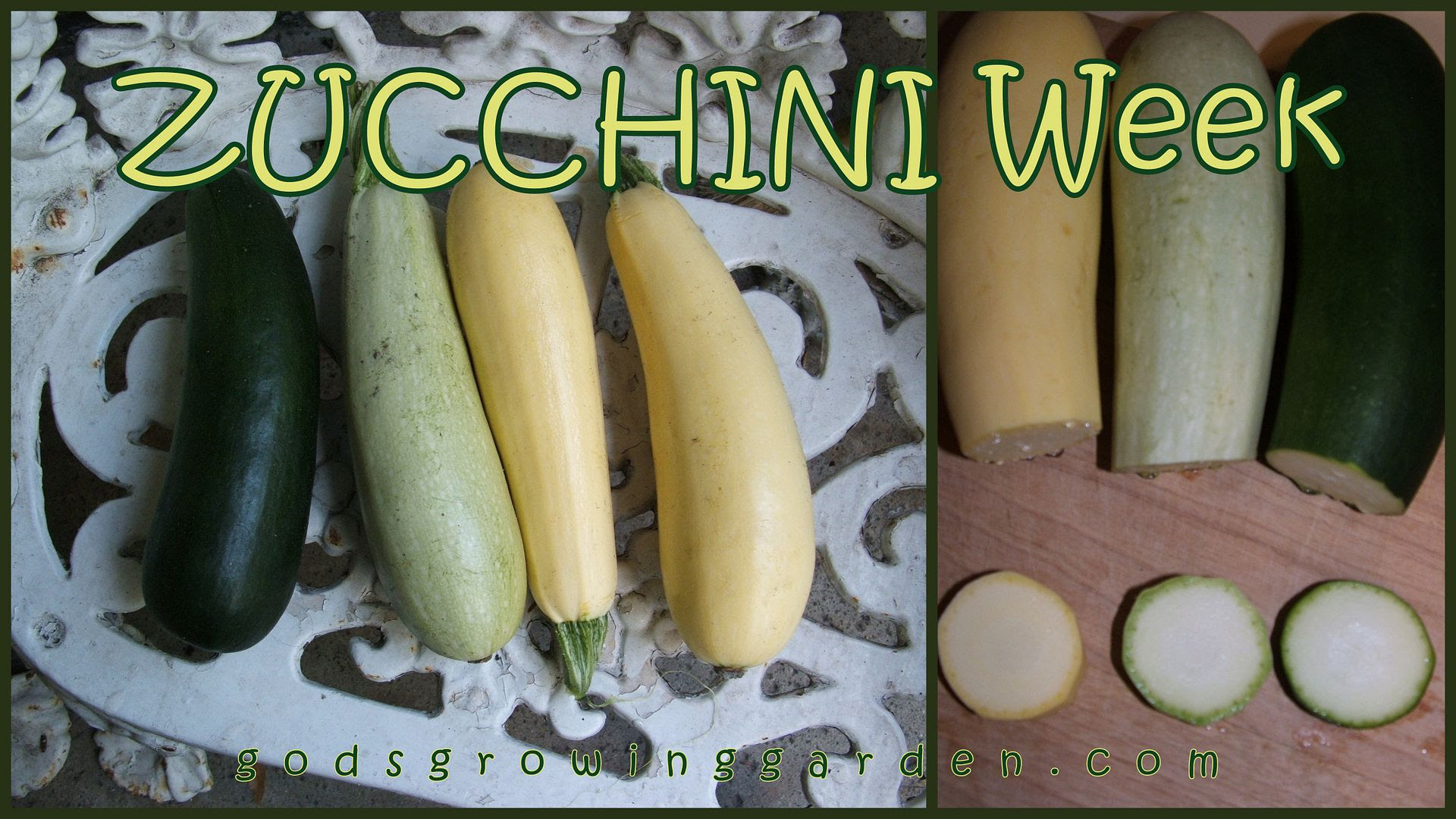 zucchini by Angie Ouellette-Tower for godsgrowinggarden.com photo 2012-08-01_zps2c472265.jpg