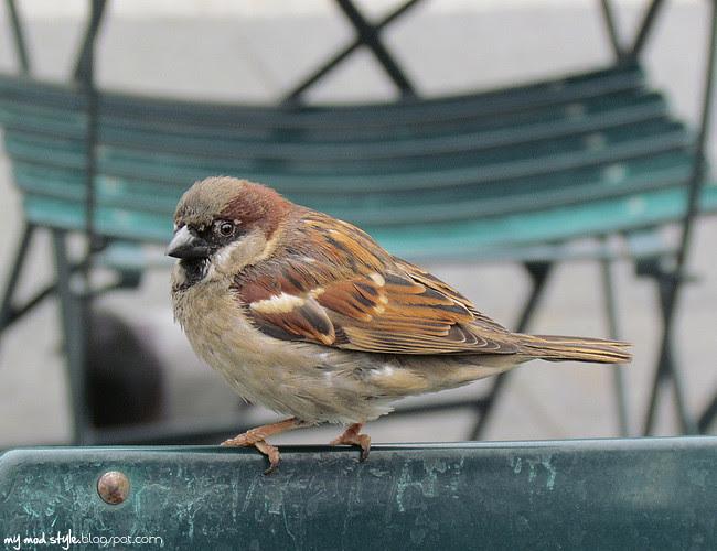 cincy bird