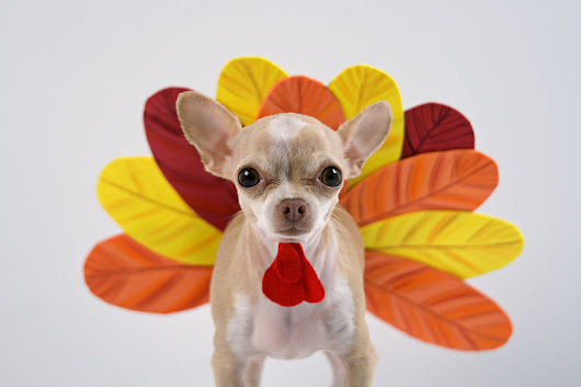 What To Avoid Feeding Dogs: Holiday Reminders - Scottsdale Pet Hotel