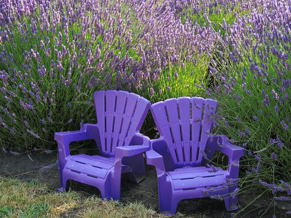 sweet seats