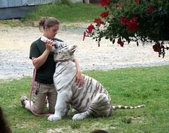TigerWorld_52309_MiracleL