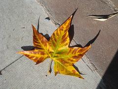 Fall and shadows-2