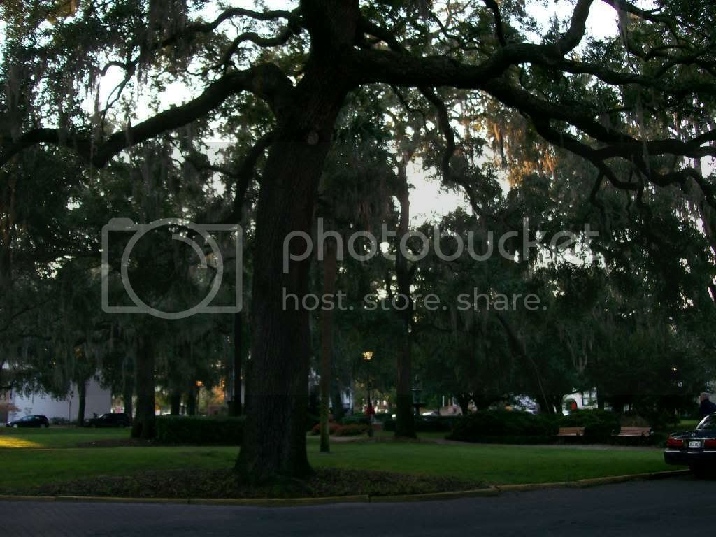 Because you simply can't have enough live oak -- click to see larger image