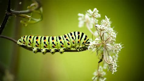 Full HD Wallpaper caterpillar striped stick, Desktop