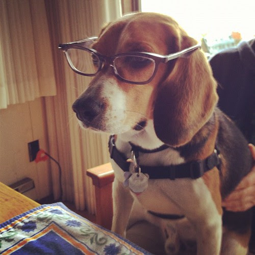 Charles Barkley, CEO of Casa Beagle International calls this meeting to order #beaglesinglasses