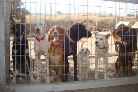 Animal Shelter in Danger at the Island of Santorin - Online Petition