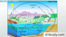 Cycles Of Matter The Nitrogen Cycle And The Carbon Cycle Video Lesson Transcript Study Com