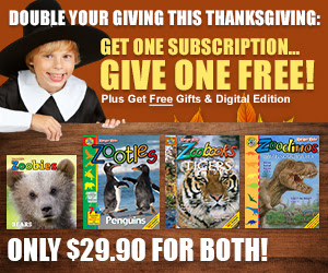 Zootles Magazine for Kids 2-6