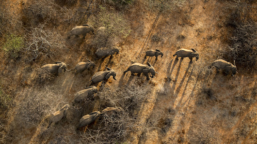 Good News for Elephants: How These Communities Reduced Poaching by 35 Percent