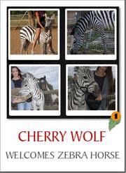 CHERRY WOLF 001 - welcomes zebra horse