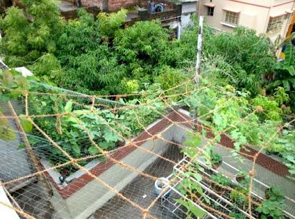 An Office Rooftop Garden In Kolkata West Bengal City