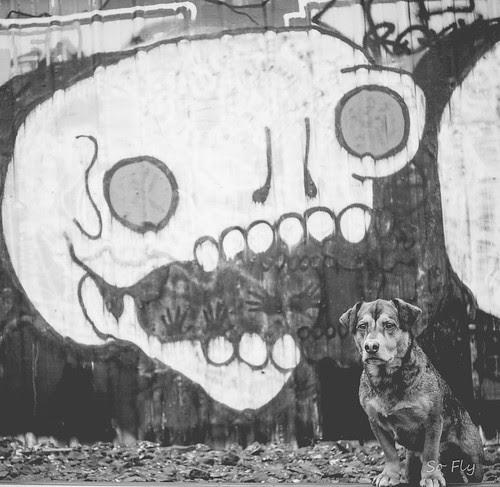 skull-0383