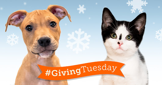 #GivingTuesday - Get Your Gift in Early!