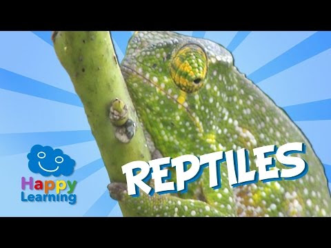 Fishes, reptiles and insects أسماء الأسماك و الزواحف والحشرات