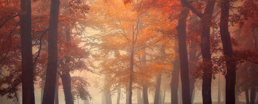 20 Mindblowing Fall Photographs for Your Inspiration - DesignGrapher.Com | Design & Photography blog