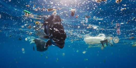 How Bad Is The Global Plastic Pollution Problem And What Can We Do About It?
