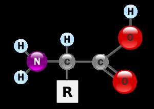 Structure générale d'un acide aminé.