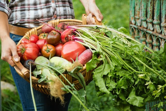 Organic Farming Is Not Sustainable