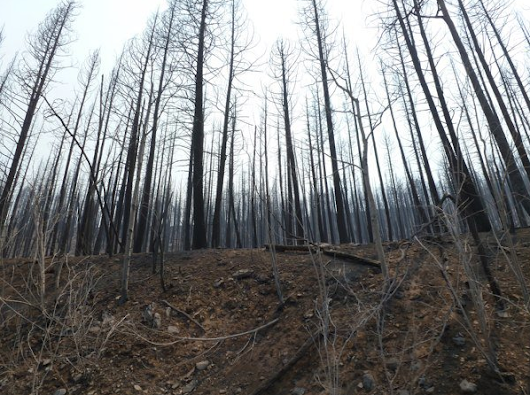 Wallow Fire: Three Years Later and Why Leave No Trace Matters