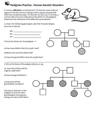 Genetics Pedigree Worksheet Answer - worksheet