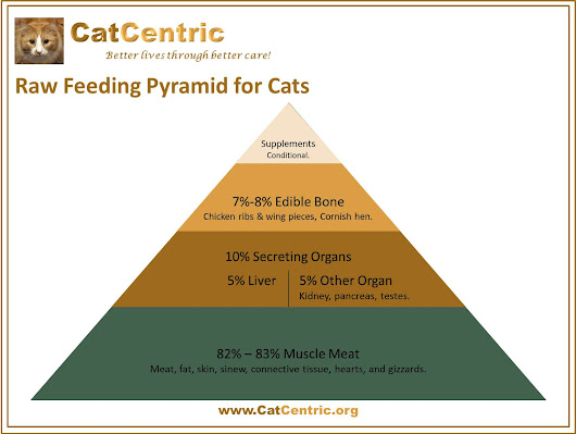An all-meat diet is NOT OK to feed a cat. | CatCentric