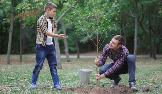 Can I Plant a Tree This Time of Year? | Complete Tree Care