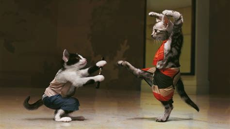 full hd wallpaper kung fu cat hit fight desktop