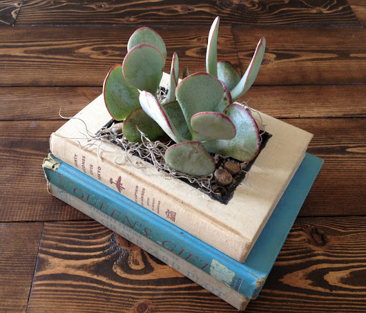— Discarded Books Transformed into Quirky Planters ...