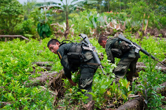 A side effect of peace in Colombia? A cocaine boom in the U.S.