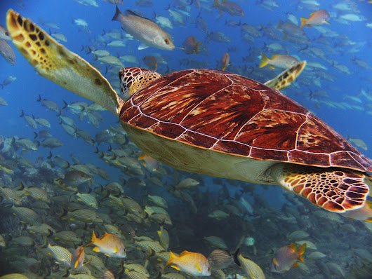 Three Cheers for Fish and Sea Turtles in the Gulf! - Ocean Conservancy