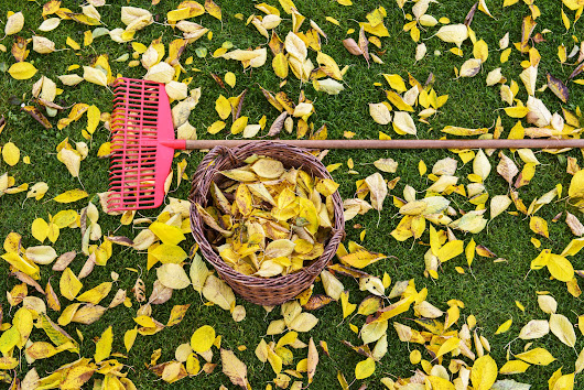 5 Ways to Use Autumn Leaves in the Garden