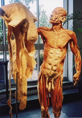 Body Worlds - Skin Man