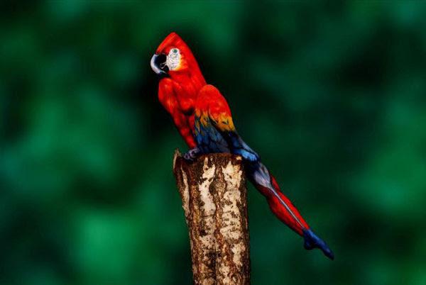 perierga.gr - Κι όμως! Αυτό που βλέπετε δεν είναι παπαγάλος!
