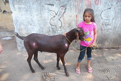 The Goat And The Girl Child by firoze shakir photographerno1