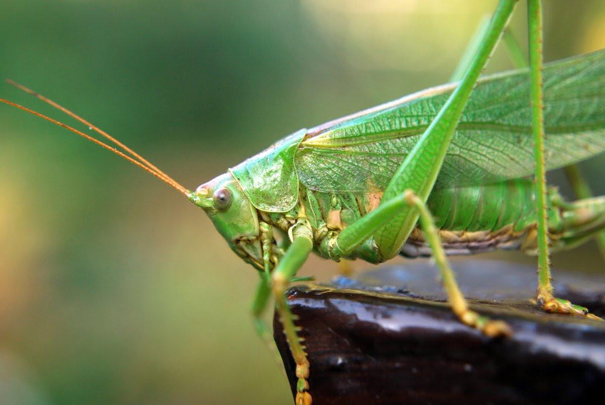 biblical plague locust bolivia, biblical plague locust bolivia february 2017, biblical plague locust bolivia 2017 video