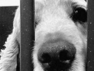 Φωτογραφία για Ανοίγει ο δρόμος για σκυλίσιο κρέας στα σούπερ μάρκετ της Ελλάδας;