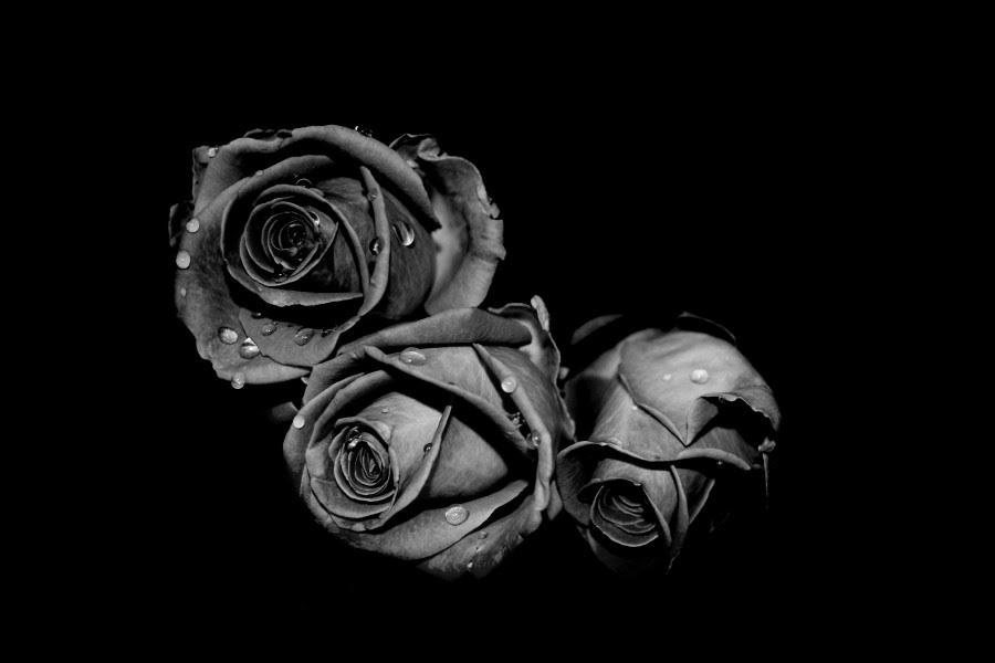 Tres Rosas En Blanco Y Negro 78476