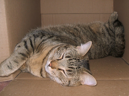 Box Napping