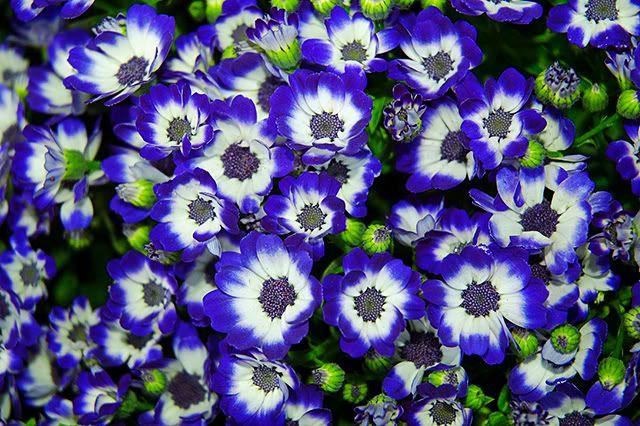 Purple Flowers Fantasy [enlarge]