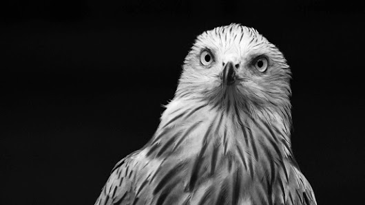 Close-Up Of Eagle Against Black Background