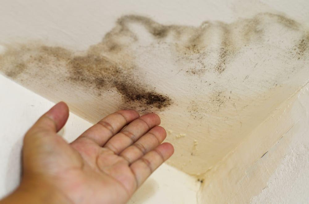 Mold Removal NYC NY NJ - Dry Ease