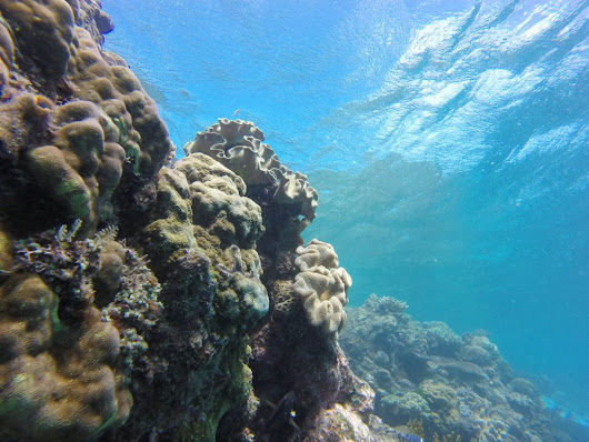 Monday Geology Picture: Great Barrier Reef View - Georneys