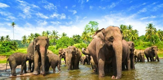 Sign Petition: Six Elephants Died After Eating Toxic Waste - Tell the Dump to Build a Fence